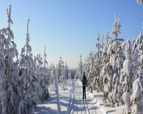 Expedición de esquí de fondo por Laponia