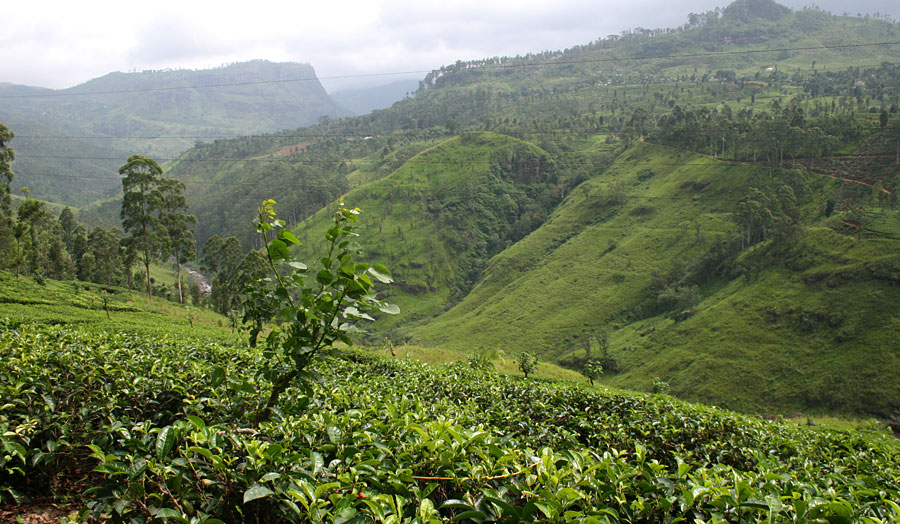 """Colombo, Rundreise """"Fabelhaftes Sri Lanka"""" & Baden in Sri Lanka"""