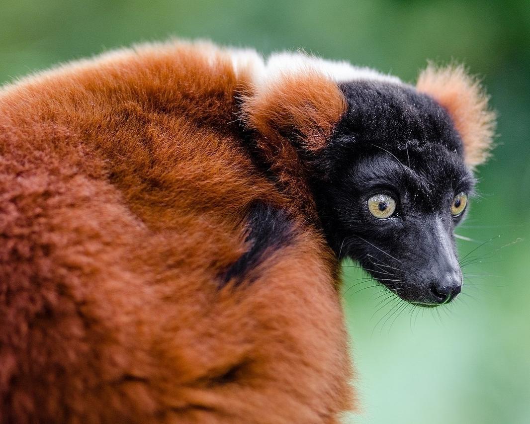 "Privatrundreise ""Madagaskars Osten"""