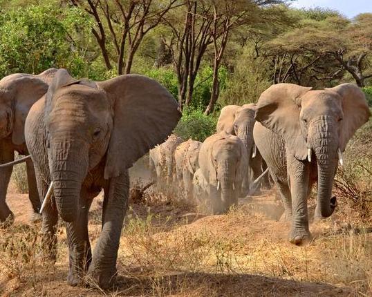 """Tansania Simba Safari"" & Trauminsel Sansibar"