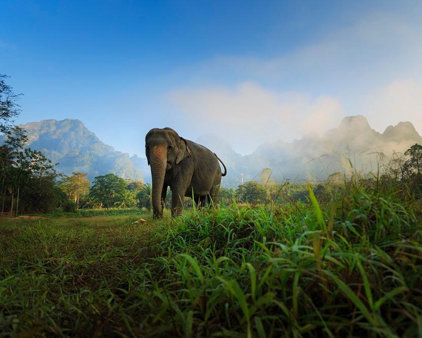 Elephant Hills Jungle Safari (ab Phuket bis Khao Lak)