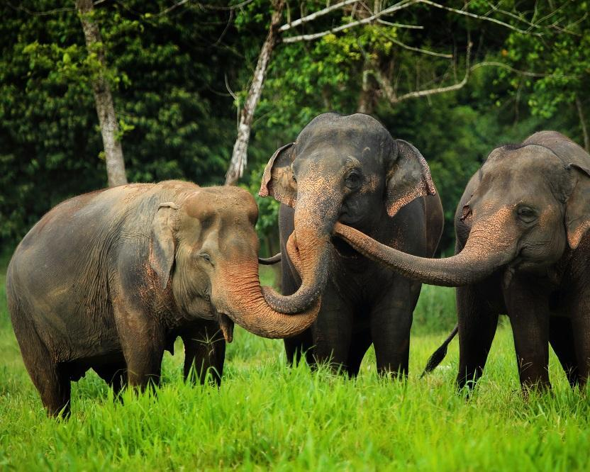 "Phuket - ""Elephant Hills Regenwald Natur Safari"" - Koh Samui"