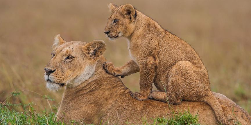 """Safari """"Best of Kenia"""""""
