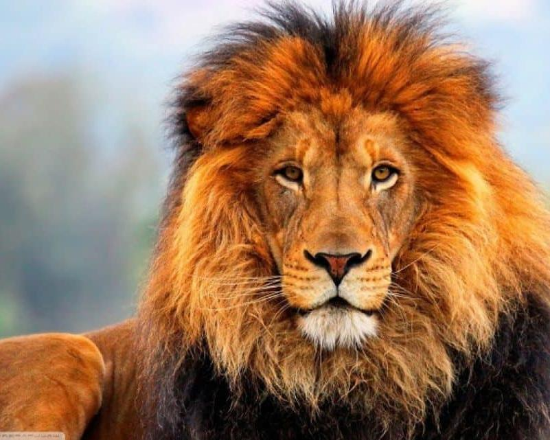 Classic Safari Nyota en 4x4 Kenia &Tanzania 2019