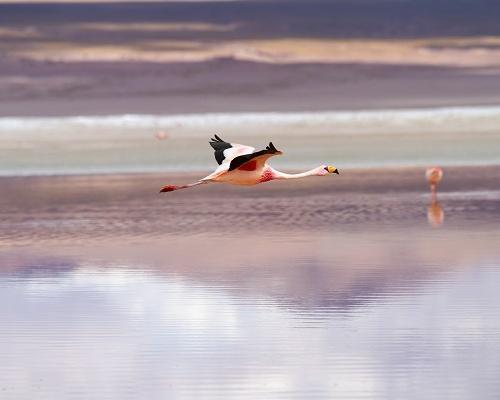 Colourful Lagoons & Uyuni Salt Flats 8D/7N