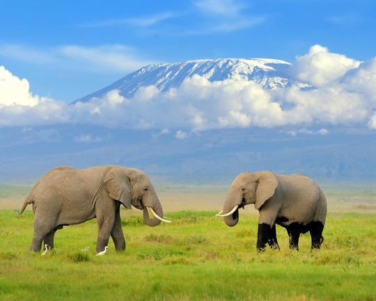 "Safari ""Best of Kenia"" & Baden auf Mauritius"