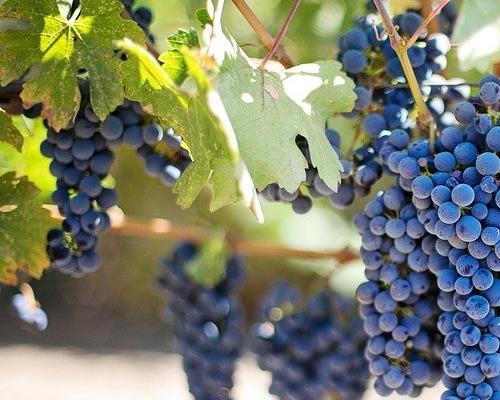 Ruta del vino en Valle de Guadalupe