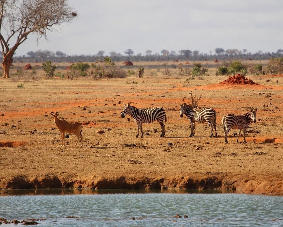 Kenia: Savanne, Regenwald & Strand