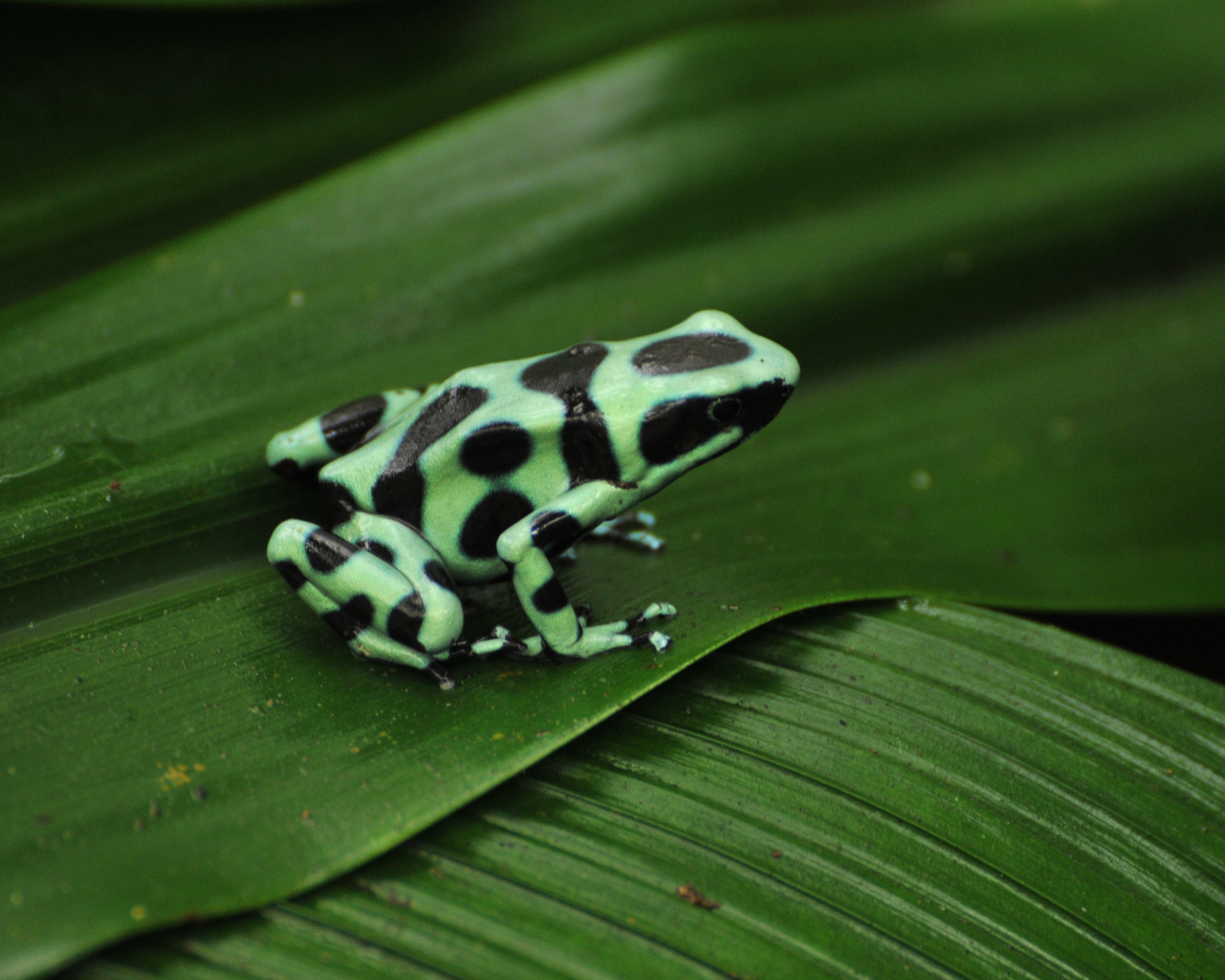 "Panama-City, Costa Rica Dschungeltour ""Tortuguero Mawamba Lodge"" & Karibikküste"