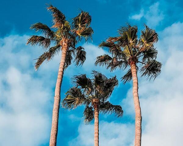 Combinado Tenerife + Gran Canaria