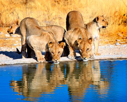 3 Days. Namibia 4* | Etosha National Park
