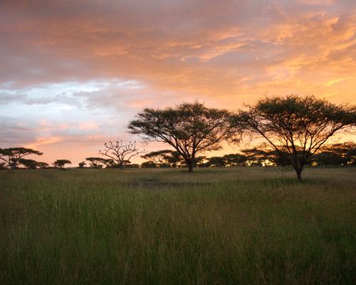 Kenya y Tanzania, Safari Enkai 8D / 7N