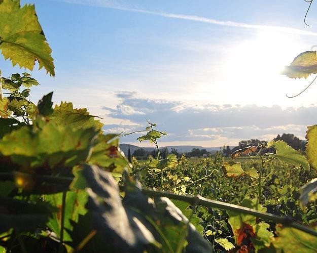 Tenerife con visita y cata de vinos a las Bodegas Monje