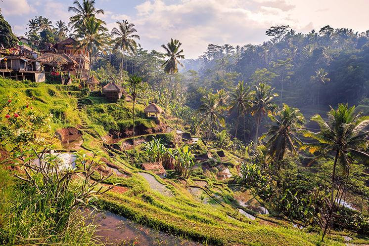7 Days. Bali 5*
