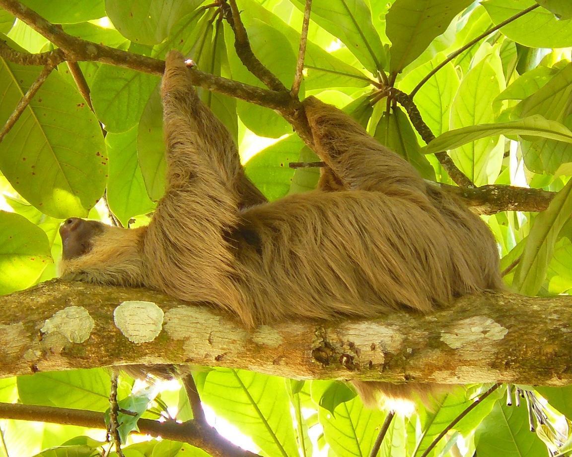 """Selbstfahrer-Rundreise """"Costa Ricas Norden"""" & Baden auf der Nicoya-Halbinsel"""