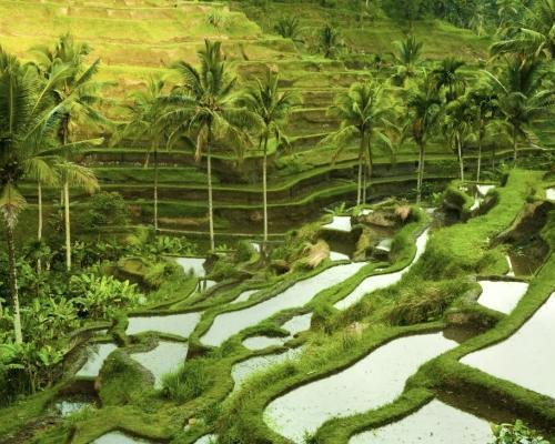 Bali, Ubud októberben