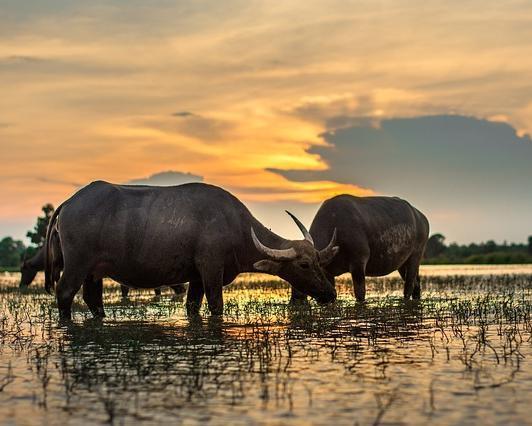 """Privatrundreise """"Kambodscha - Laos Überland"""" & Baden auf Phuket"""