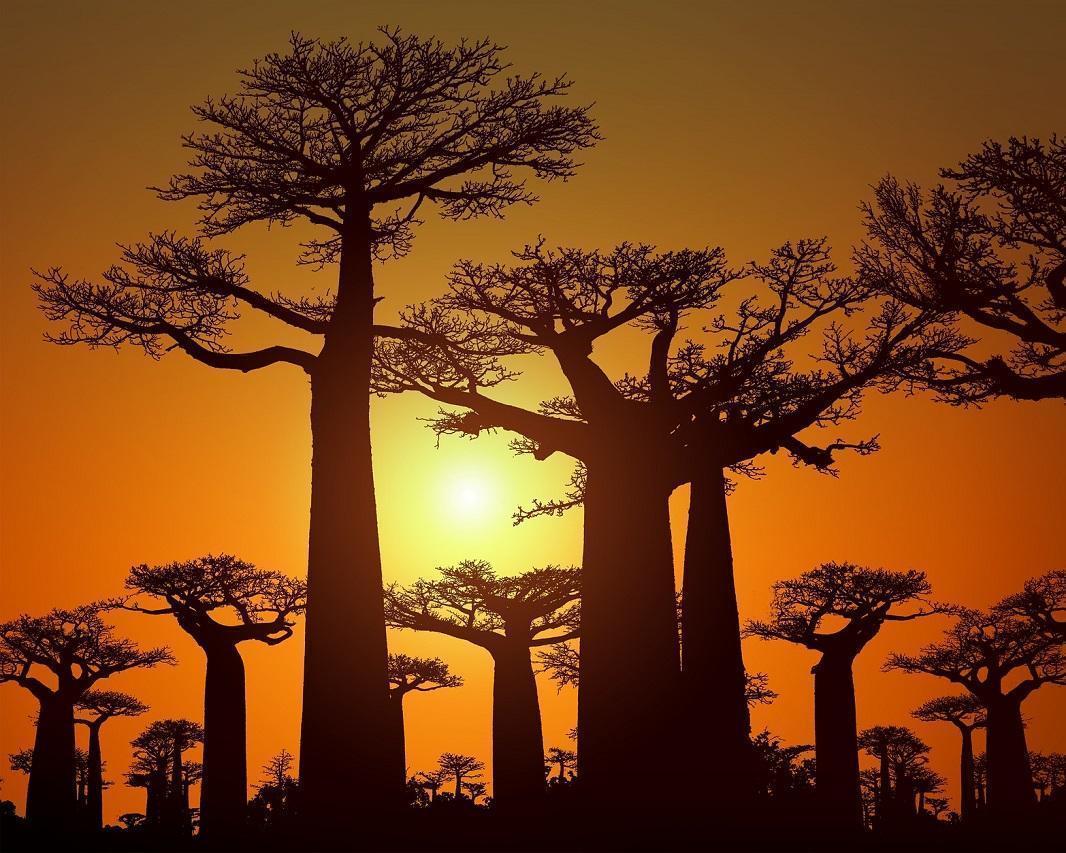 """Rundreise """"Madagaskars Süden & Osten"""""""