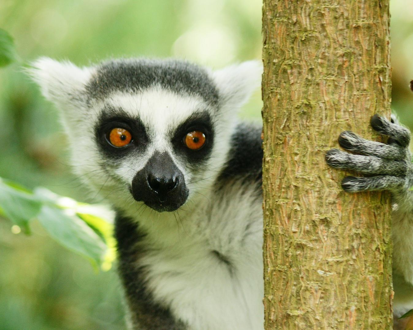 """Rundreise """"Madagaskars Osten"""" & Baden auf Mauritius"""