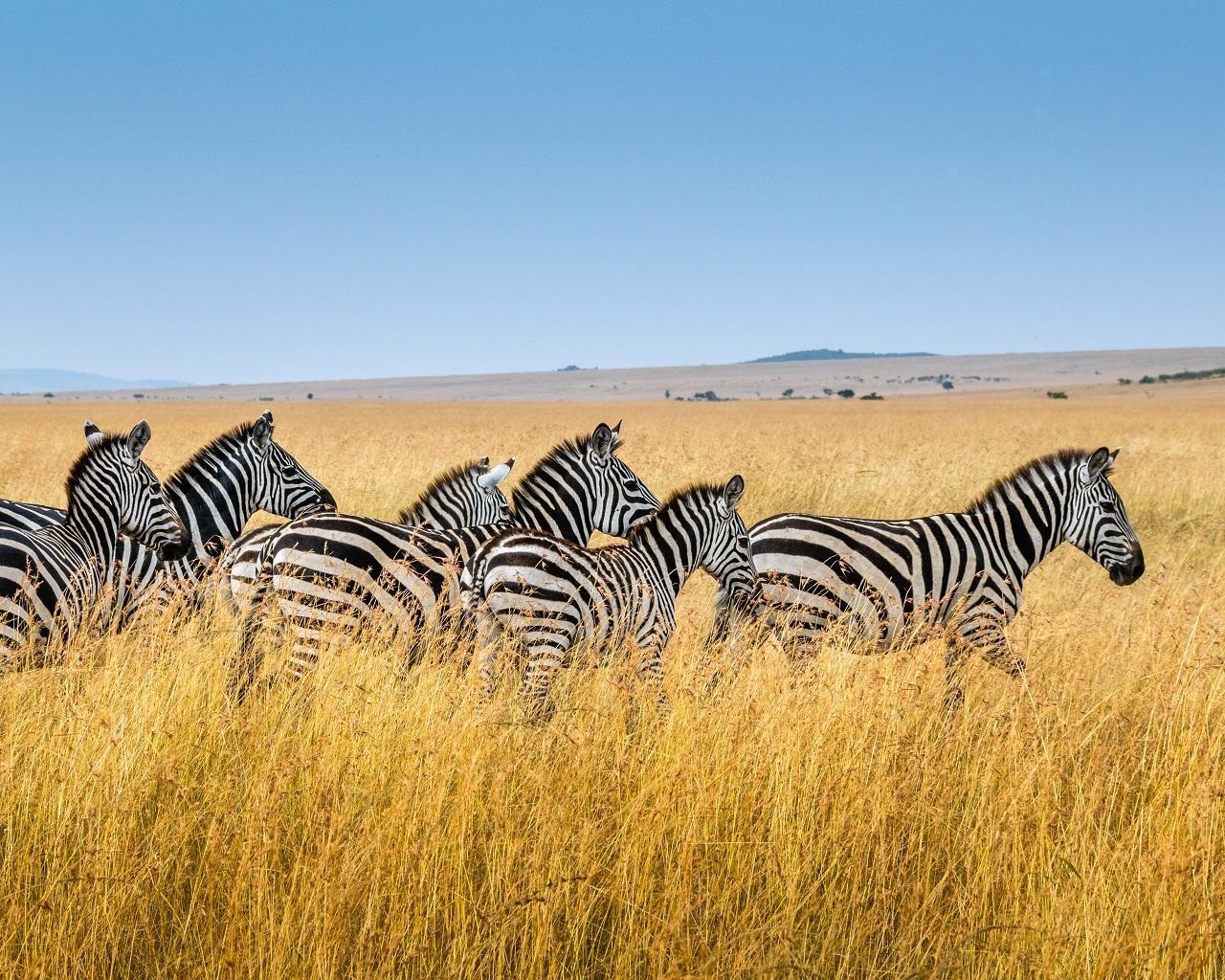Klassische Safari Kenia & Madagaskars Osten