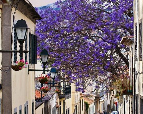 Madeira, egy hét szállással és repjeggyel