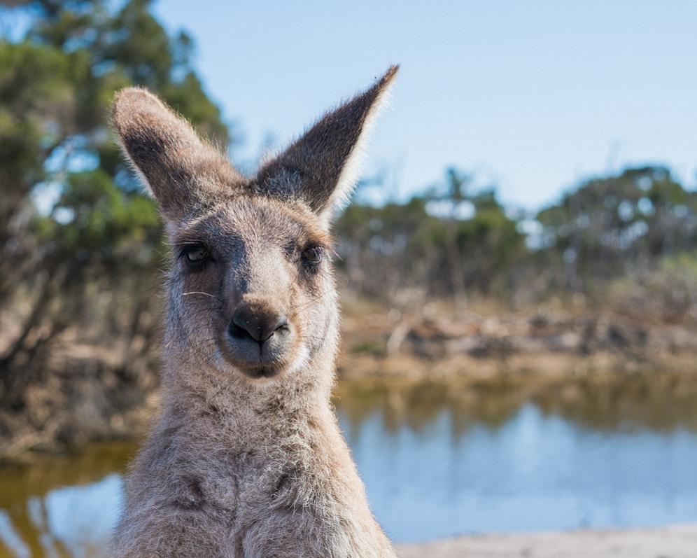 """Rundreise """"Australisches Panorama"""""""